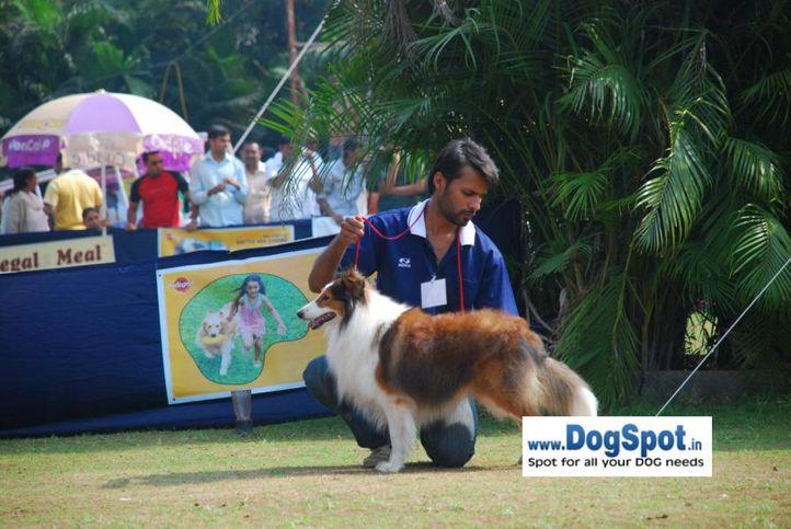 Sheetland, Pune 2010, DogSpot.in