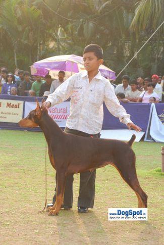 Child Handling,, Pune 2010, DogSpot.in