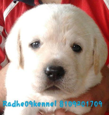 radhe09kennels album, radhe09kennel's album, DogSpot.in