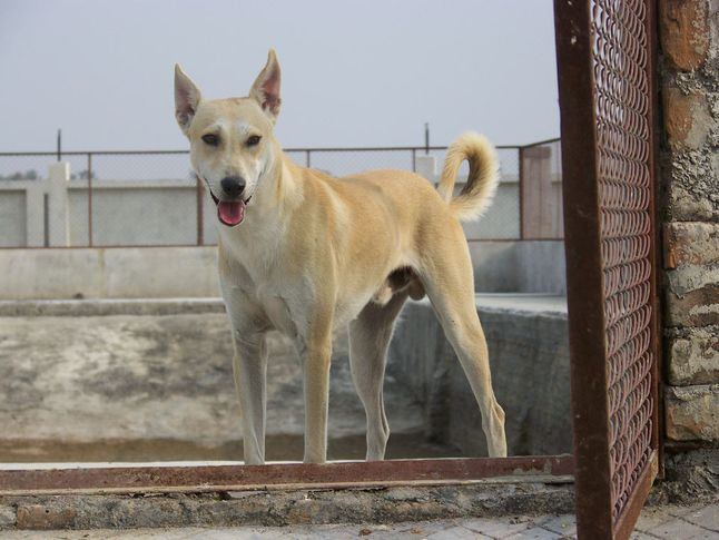 Rescued Dog, Rescued Dog, DogSpot.in
