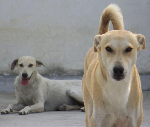 Rescued Dogs, Rescued Dogs, DogSpot.in