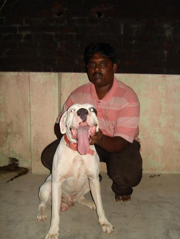Boxer,Boxer puppy,dog training, Ricky, DogSpot.in