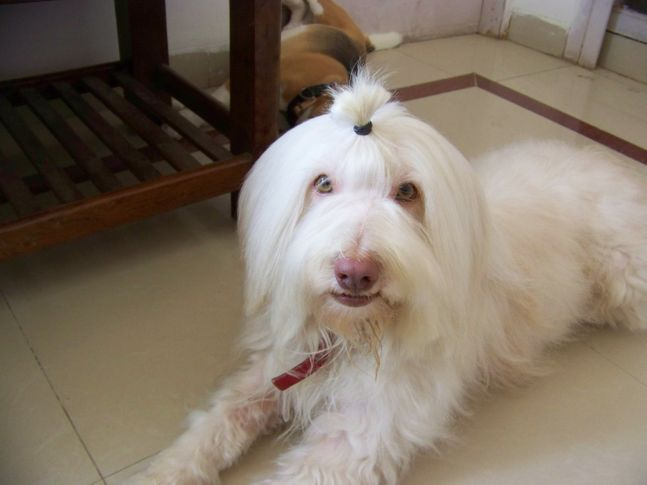 , Rimjhim After Hair Brushing, DogSpot.in