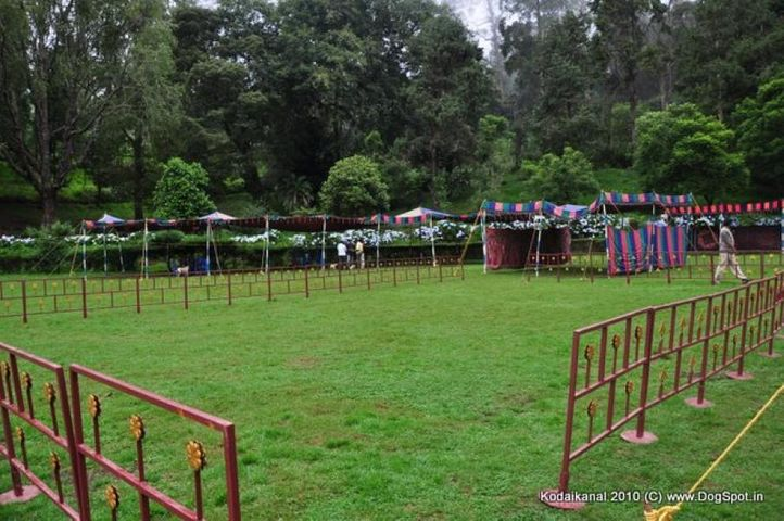 ground,, Rings waiting for Judges and Dogs, DogSpot.in