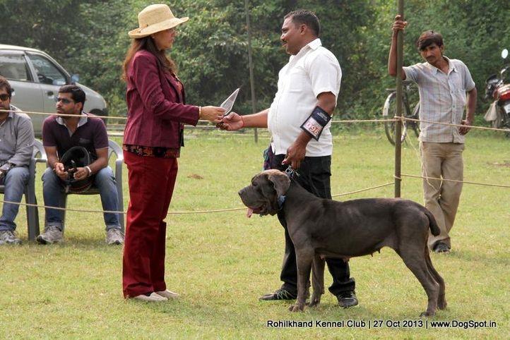 ex-96,neapolitan mastiff,sw-95,, LUSHA, Neapolitan Mastiff, DogSpot.in