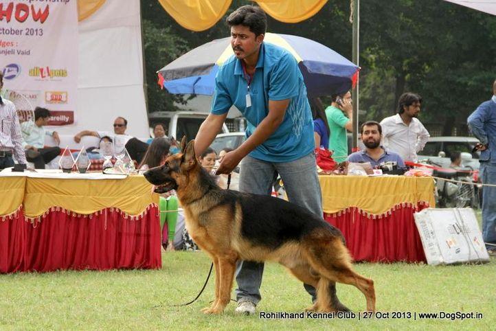 ex-127,german shepherd,sw-95,, JOCKER OF LIONHEART, German Shepherd Dog, DogSpot.in