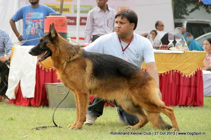 ex-130,german shepherd,sw-95,, Harry Von Der Ramhorst, German Shepherd Dog, DogSpot.in