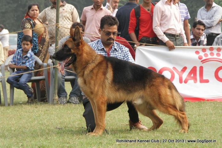 ex-136,german shepherd,sw-95,, ZAZIKI VOM FEUERMELDER, German Shepherd Dog, DogSpot.in