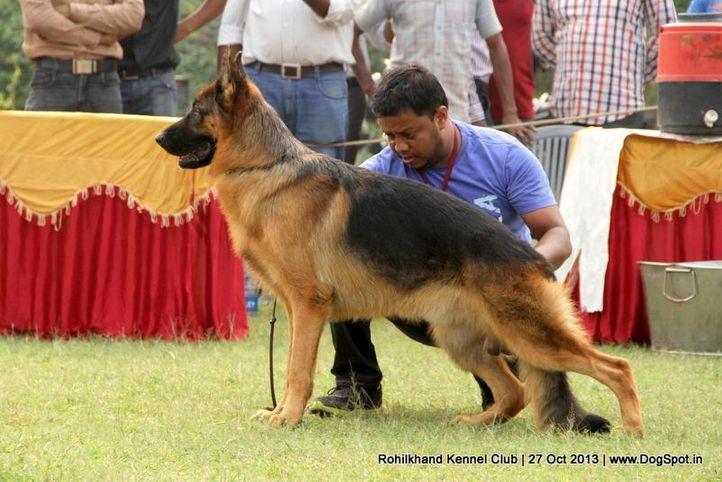 ex-144,german shepherd,sw-95,, REBELL VOM KOLSTER MOOR, German Shepherd Dog, DogSpot.in