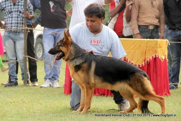 ex-131,german shepherd,sw-95,, Dem Dem, German Shepherd Dog, DogSpot.in