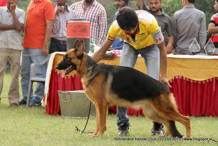 ex-132,german shepherd,sw-95,, ROJA, German Shepherd Dog, DogSpot.in