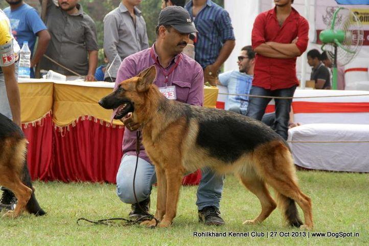 ex-133,german shepherd,sw-95,, SWEETY, German Shepherd Dog, DogSpot.in