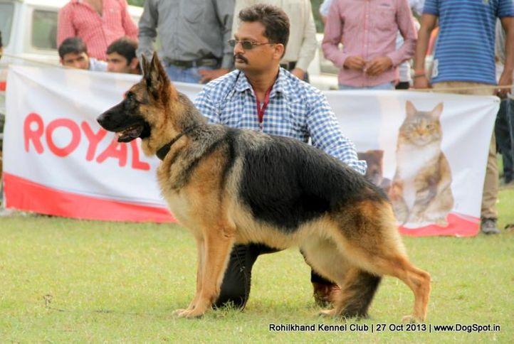 german shepherd,sw-95,ex-136, ZAZIKI VOM FEUERMELDER, German Shepherd Dog, DogSpot.in