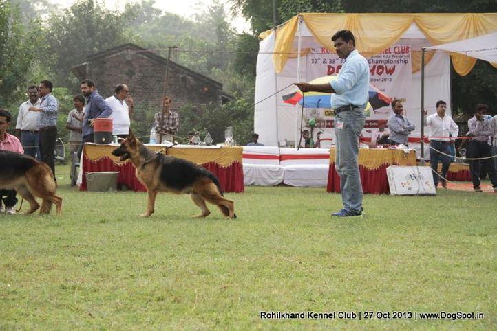 ex-145,german shepherd,sw-95,, HEENA OF BHALOTHIA, German Shepherd Dog, DogSpot.in