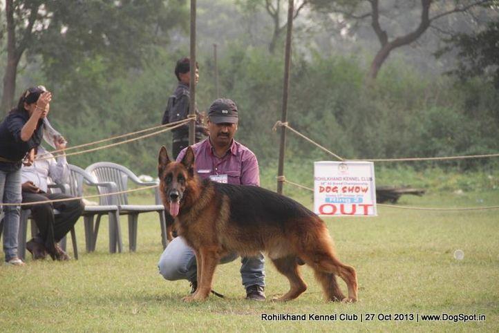 ex-138,german shepherd,sw-95,, SANARP'S ESKO, German Shepherd Dog, DogSpot.in