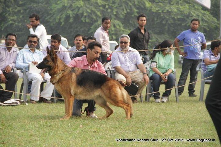 ex-140,german shepherd,sw-95,, CHIARA VOM KIRCHTURM, German Shepherd Dog, DogSpot.in