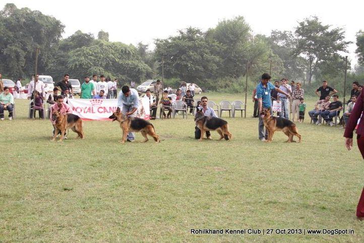 german shepherd,sw-95,, Rohilkhand Dog Show 2013, DogSpot.in