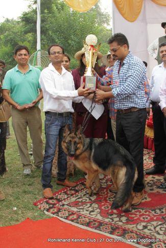 bis,ex-136,german shepherd,sw-95,, ZAZIKI VOM FEUERMELDER, German Shepherd Dog, DogSpot.in