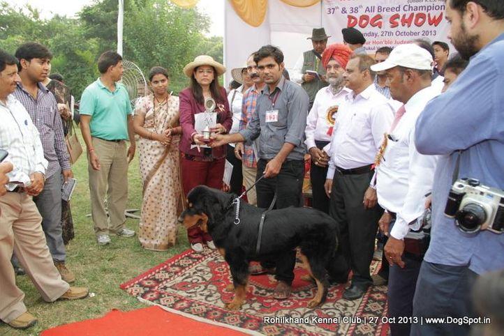 bbi,ex-121,sw-95,tibetan mastiff,, DREAM GIRL, Tibetan Mastiff, DogSpot.in