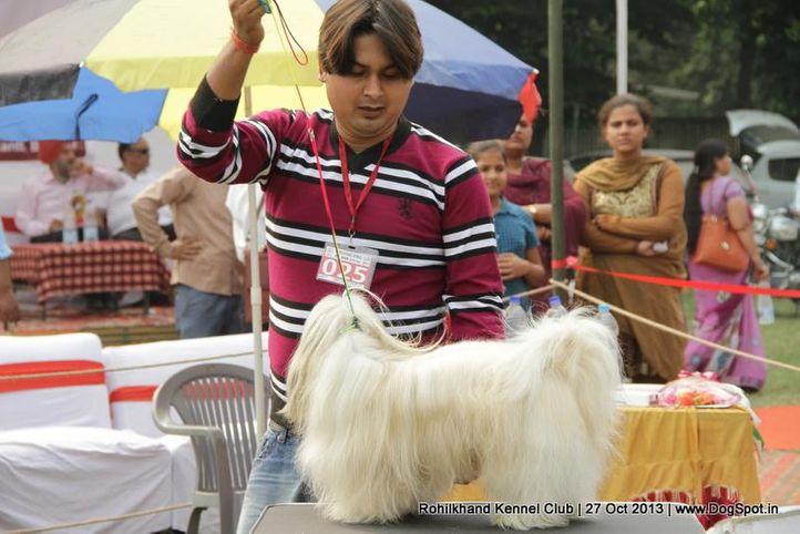 ex-25,lhasa apso,sw-95,, TEZ, Lhasa Apso, DogSpot.in