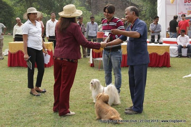 lhasa apso,sw-95,, Rohilkhand Dog Show 2013, DogSpot.in