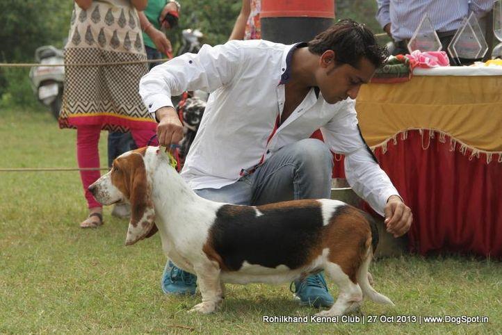 basset hound,sw-95,, Rohilkhand Dog Show 2013, DogSpot.in
