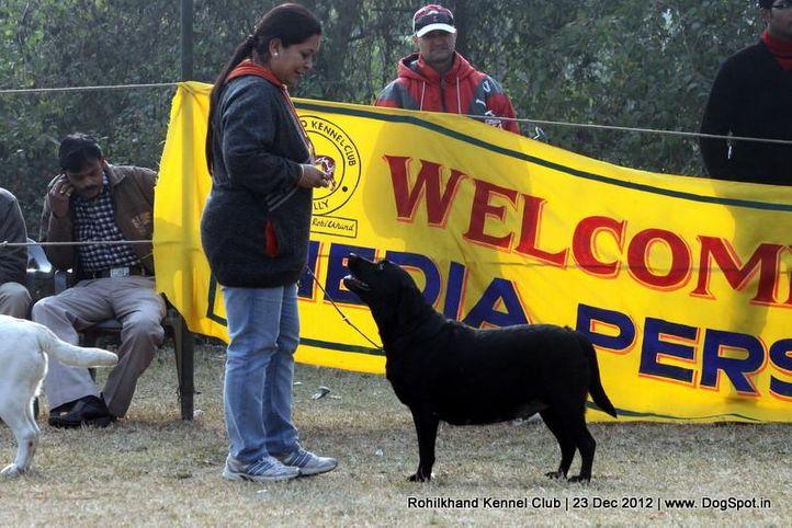 ex-80,labrador retriever,sw-74,, ENAKSHI'S CRAZY GIRL, Labrador Retriever, DogSpot.in