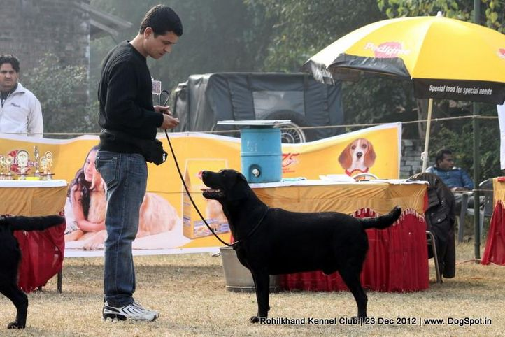 labrador retriever,sw-74,, Rohilkhand Dog Show , DogSpot.in