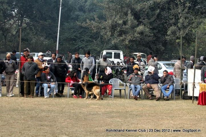 neapolitan mastiff,people,sw-74,, Rohilkhand Dog Show , DogSpot.in