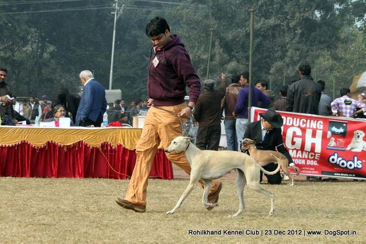 ex-40,rampur hound,sw-74,, ANURAGA, Rampur Hound, DogSpot.in