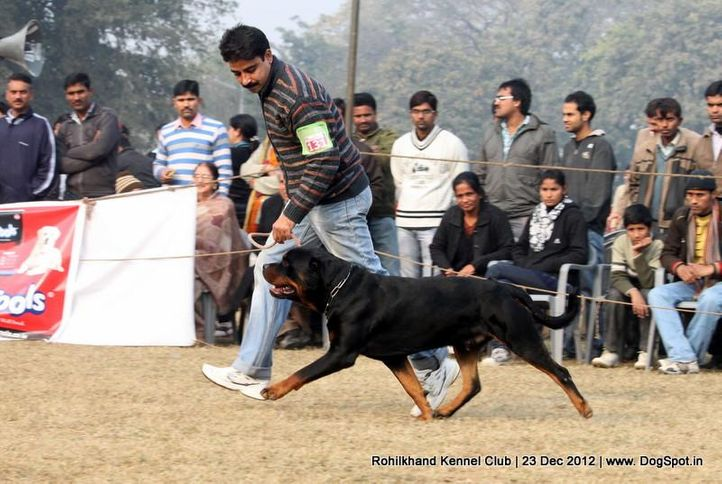ex-131,rottweiler,sw-74,, ENZO EARL ANTONIOUS, Rottweiler, DogSpot.in
