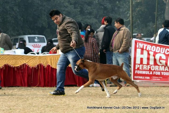 boxer,ex-103,sw-74,, NEXT STEP'S TRIUMPH, Boxer, DogSpot.in