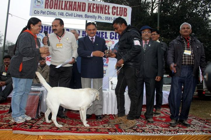 labrador retriever,line up,sw-74,, Rohilkhand Dog Show , DogSpot.in