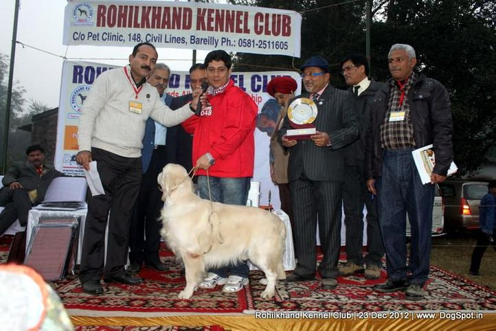 golden retriever,line up,sw-74,, Rohilkhand Dog Show , DogSpot.in