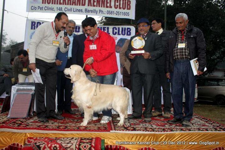 golden retriever,line up,sw-74,, Rohilkhand Dog Show , DogSpot.in