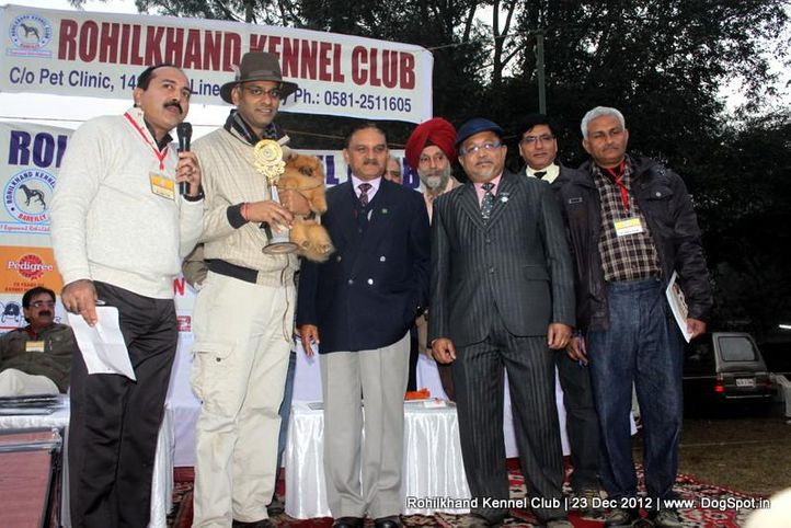 line up,pomeranian,sw-74,, Rohilkhand Dog Show , DogSpot.in