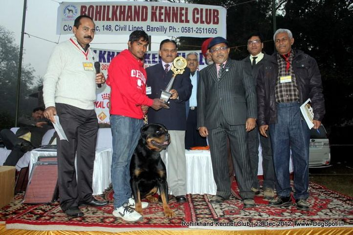line up,rottweiler,sw-74,, Rohilkhand Dog Show , DogSpot.in