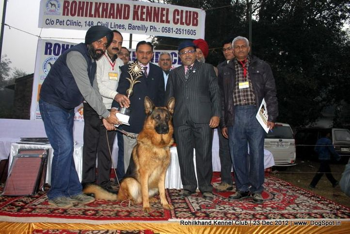 german shepherd,line up,sw-74,, Rohilkhand Dog Show , DogSpot.in