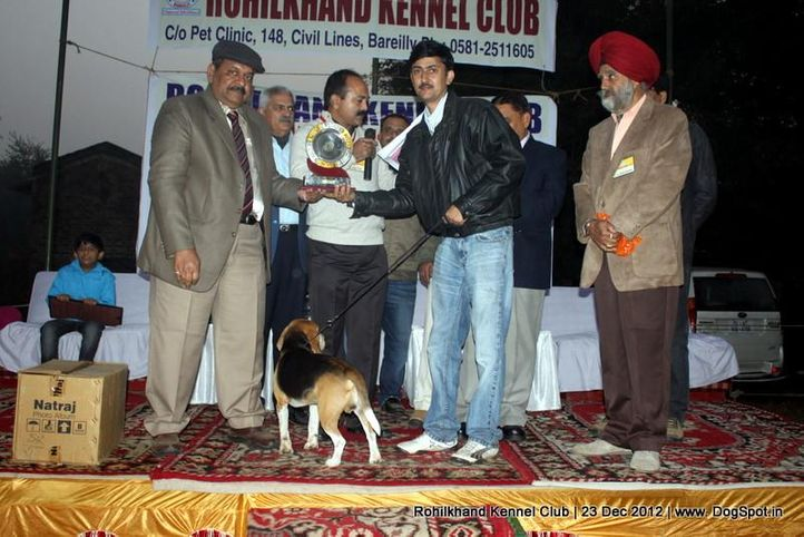beagle,line up,sw-74,, Rohilkhand Dog Show , DogSpot.in