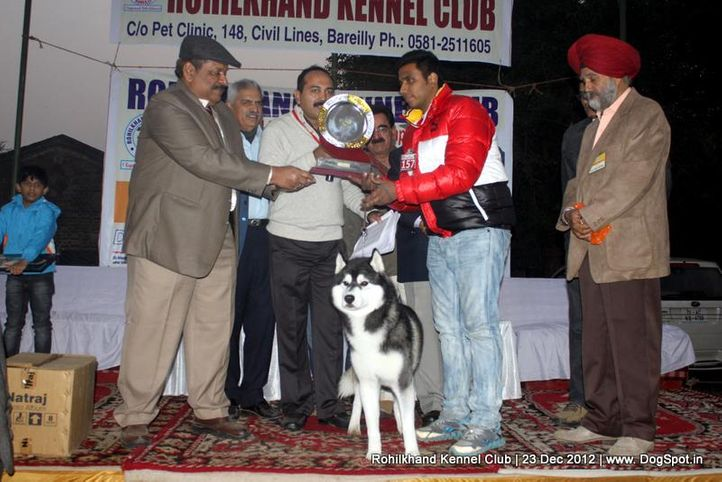 line up,siberian husky,sw-74,, Rohilkhand Dog Show , DogSpot.in