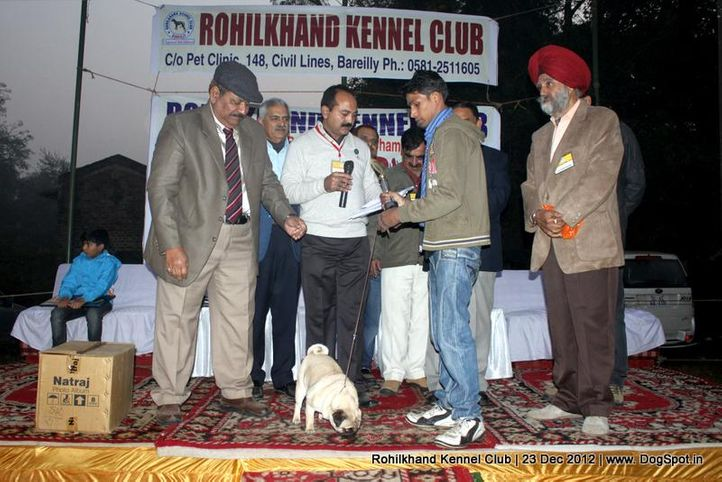 line up,pug,sw-74,, Rohilkhand Dog Show , DogSpot.in