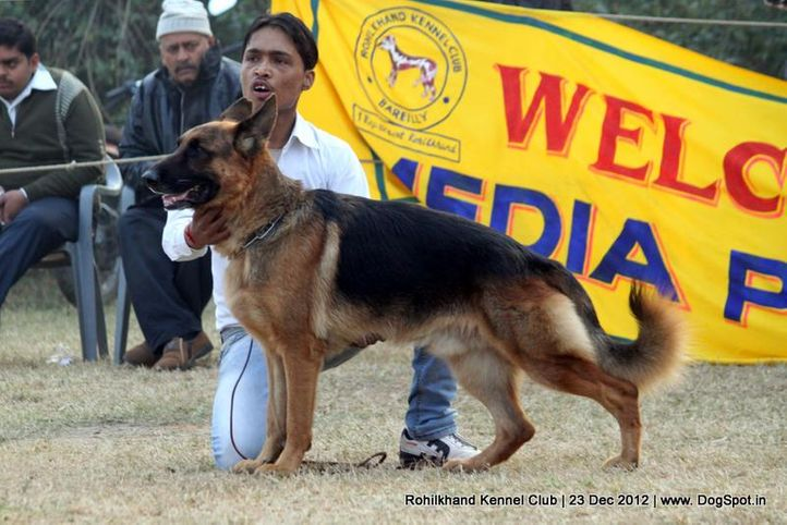 ex-162,german shepherd,sw-74,, PALLIBERG AEXX, German Shepherd Dog, DogSpot.in