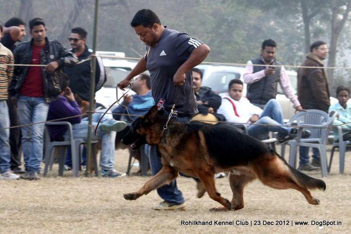 ex-167,german shepherd,sw-74,, IORK TERRAE LUPIAE, German Shepherd Dog, DogSpot.in