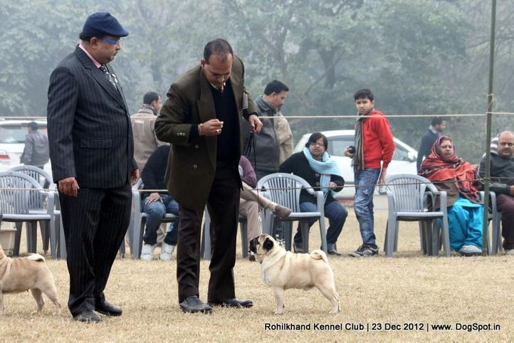 pug,sw-74,, Rohilkhand Dog Show , DogSpot.in