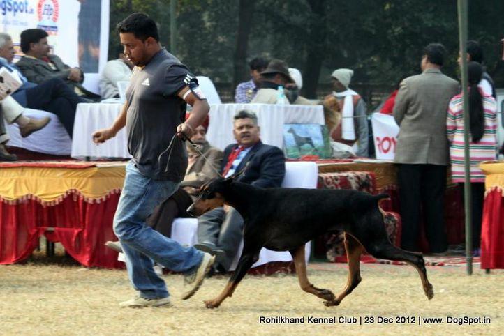 dobermann,sw-74,, Rohilkhand Dog Show , DogSpot.in