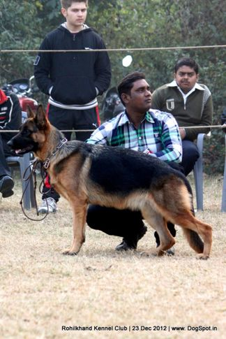 german shepherd,sw-74,, Rohilkhand Dog Show , DogSpot.in