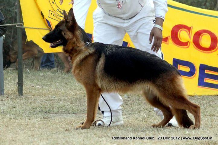 ex-172,german shepherd,sw-74,, ASHA'S JERRY, German Shepherd Dog, DogSpot.in