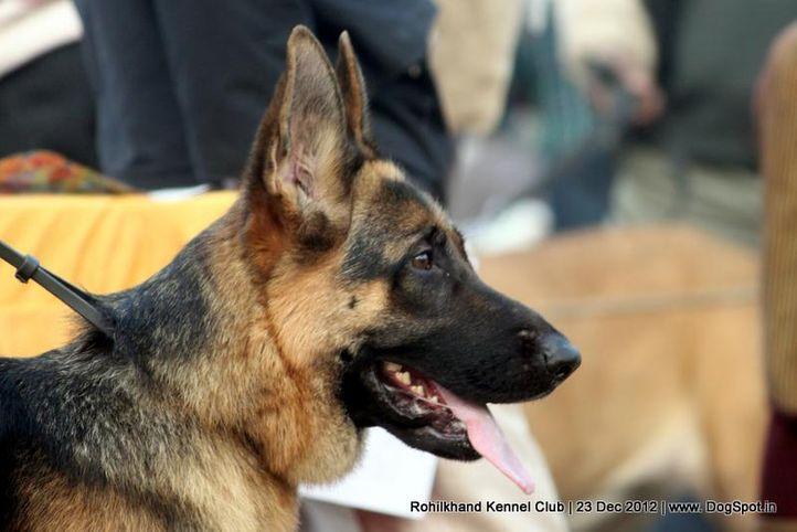 german shepherd,sw-74,, Rohilkhand Dog Show , DogSpot.in