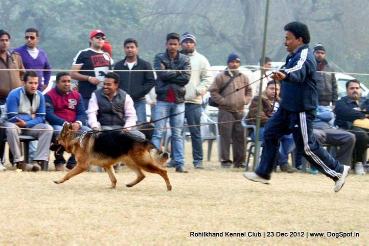 ex-185,german shepherd,sw-74,, LAYAK'S DONNA, German Shepherd Dog, DogSpot.in