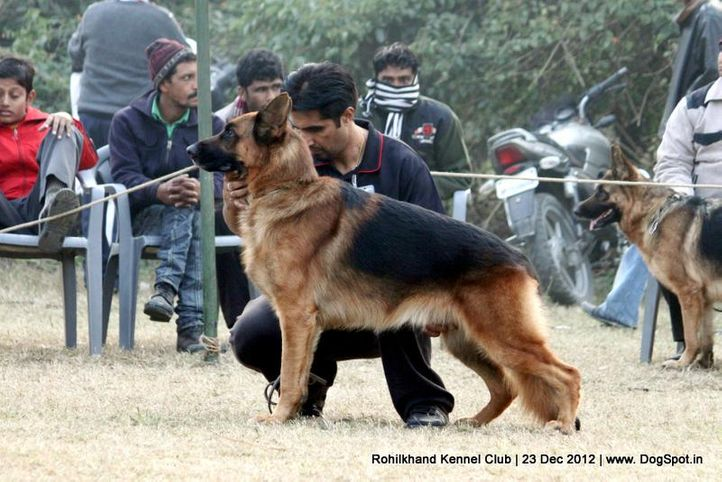 ex-170,german shepherd,sw-74,, SG1 NANTE VOM ZELLWALDRAND, German Shepherd Dog, DogSpot.in